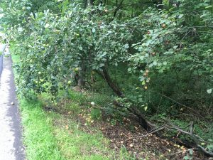 Fallen Apple Tree, Persistent